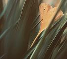 Сърцето е самотен ловец ; comments:42