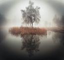 Мъгливо утро ; comments:15