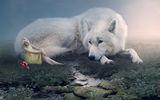Елен и белия вълк ; comments:9