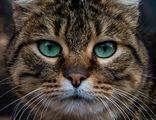 Знаеш ли, че имаш страшни очи? ; comments:8