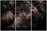 плачещи цветя... ; comments:8