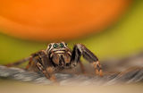 Spider ; comments:3