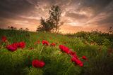 Непокътната дива природа ; comments:11