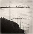 Crossroads ; comments:9