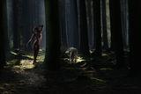 Тъмната гора ; comments:4