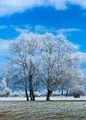 Един зимен ден ; Comments:4
