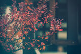 есенна импресия... ; comments:21