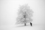 ''Зима'' ; comments:29