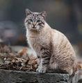 Котка ; comments:5