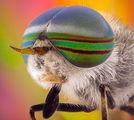 Най красивата муха ; comments:16