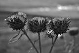 Настроение в черно бяло ; Comments:4