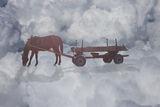 Не ги убиват уморените коне ; Comments:10