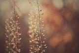 На залез слънцето е най - узряло... ; comments:5