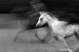 Белият кон ; comments:16