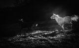 Нощем с белите коне ;) ; comments:10