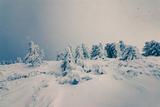 лек снежец ; Comments:9