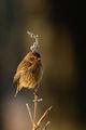 Птиче ; comments:8