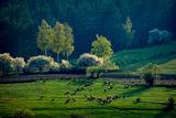 Пролетна идилия ; comments:9