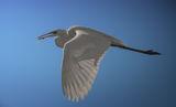 Зловещи сенки по крилата ; comments:2