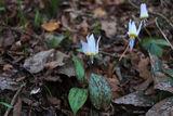 Пролетно ! ; comments:31