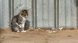 Домашна котка ; comments:5
