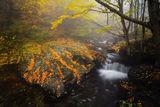 ''Разкажи ми за есента'' ; comments:40
