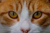Котешки очи ; No comments