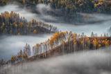 Симфония на мъглата ; comments:44