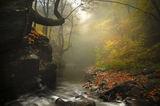 Дълбоко в мъглата ; comments:32