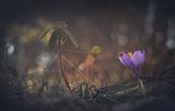 Пролетна приказка... ; comments:19