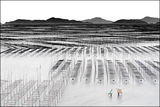 ~ Mudflats Of Xiapu #3~ ; comments:13