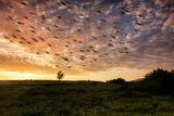 Мигрират птици от душата ми ; comments:17