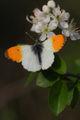 Симетрия на пеперудата ; comments:12