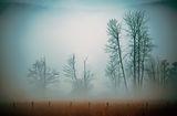 Мъгливо ; comments:9
