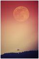 Moonrise ; comments:1
