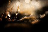 Дъждовни макро истории ; comments:11