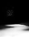 В тъмното ; comments:7