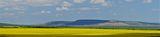 И естествено : Панорама с рапица ,баир и небе ! ; comments:11