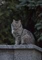 Пазителят на нашата улица(in grey) ; comments:25