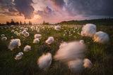 В царството на дивия памук ; comments:56