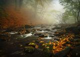 Есента си тече ; comments:26