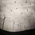 """""""С вятъра, с птиците, с мъглите на залеза"""" ... ; comments:15"""