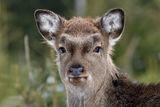 портретик оленёнка ; comments:7