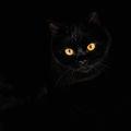 Cat minimalistic ; comments:8