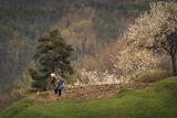 Родопска пролет ; comments:10