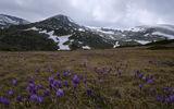 Рилска пролет ; comments:25