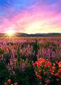 Пролетна градина ; comments:4