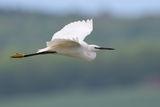 Тези, които летят, завиждат ли на нас, които ходим.... ; comments:9