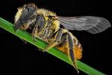 пчела ; comments:3