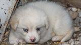 Малко сънено кученце ; comments:2